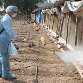 (Tiếng Việt) Một số biện pháp quan trọng phòng bệnh cho vật nuôi