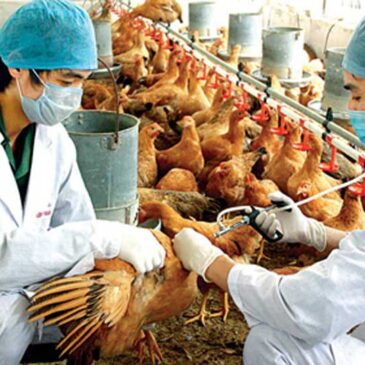 Proactive prevention of avian influenza in 2017 Lunar New Year