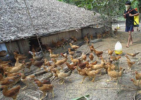 H5N1 detected again in Cambodia