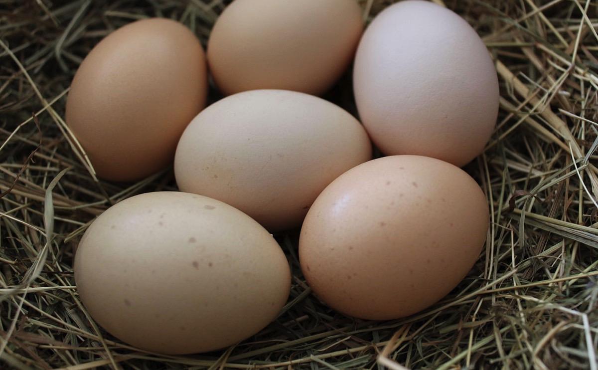 Những lý do phổ biến khiến gà ngưng đẻ trứng