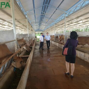 APA visit and give the technical support to cattle farm in Cambodia in August 2016